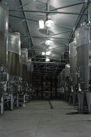 cellar filled with oak barrels