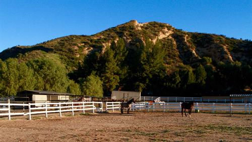 10 horses, 2 goats, chickens and dogs living on the ranch