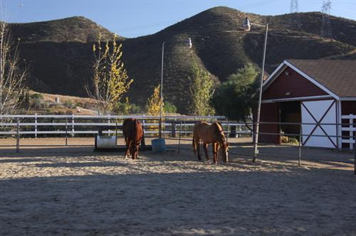 Barn and Horse arena
